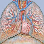 New biodegradable and medically-safe nanoparticles get past the lung mucus barrier for drug delivery