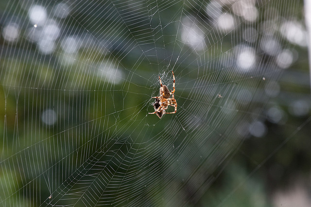 Spider webs may look delicate, but their strength and toughness are exceptional.