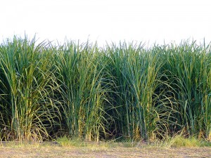 Mitsui and Dow will be making sugarcane-based plastics and polymers.