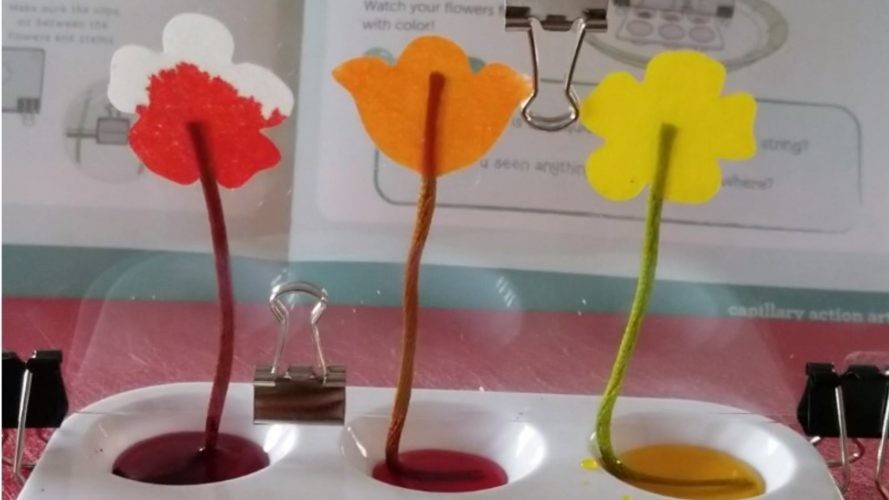 Capillary action experiment